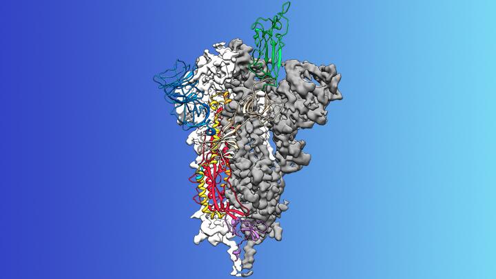Spike Protein on Novel Coronavirus