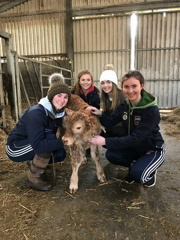 Pictured minding a very well behaved calf are Borrisoleigh students Emily Meagher, Ciara Maher, Christine Delaney and Tara Mockler at the recent Ag Science event at Kildalton agricultural college