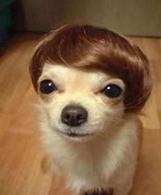 O professor de peruca…
