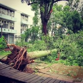 salah satu pohon tumbang