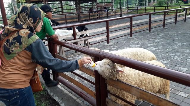 Wisata Edukasi Bersama Keluarga di Bhumi Merapi