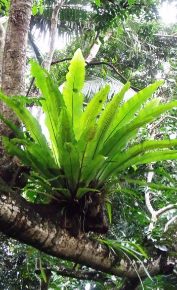 Rainforest epiphyte leaf formation / Reforestation.me