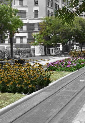 Pollinator-friendly median / Danielle Bilot