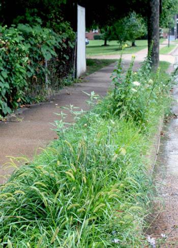 Hell strip in Arlington, VA / A Way to Garden.com