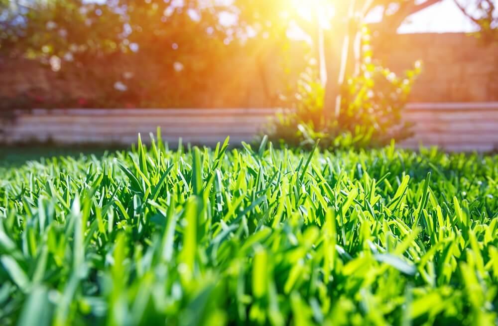 Grass Problems & How to Fix Them   Dirt Cheap Cambridge