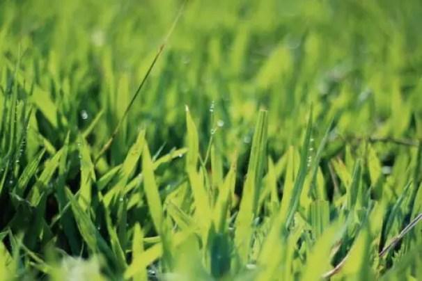 What Makes Green Grass Grow