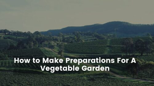 How To Make Preparations For A Vegetable Garden