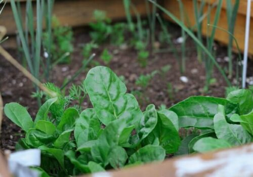 10 Vegetables That Can Grow Throughout The Year