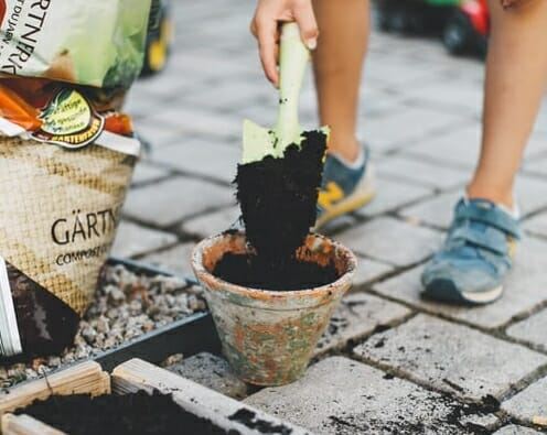 Useful Guide For A Beginner in Gardening (Guide)