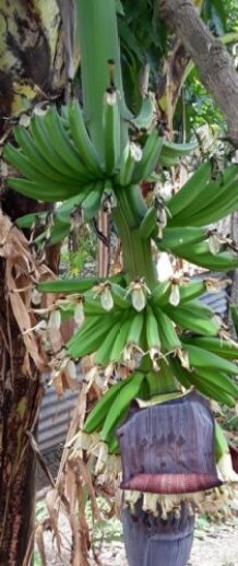 Planning Banana