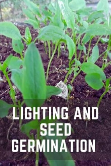 How Does Light Affect Seed Germination