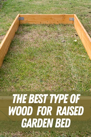 The Best Type Of Wood For Raised Garden Bed