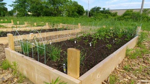 What Is The Ideal Size For A Raised Bed Garden?