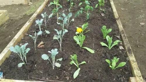Top 10 Benefits Of Raised Garden Beds In The Yard