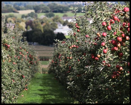 Fruit Trees That Produces fruits The Fastest