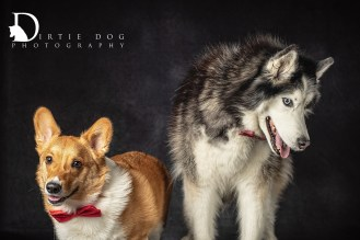 In-home studio sessions with Dirtie Dog Photography. Seattle pet photography for people who love their pets. www.dirtiedogphotography.com
