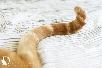 I love tails, so when a cat gives me the chance to photograph theirs, I do it.