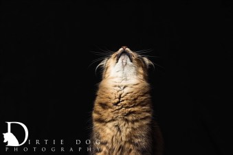 This was the cover image for Chimi's calendar. Seattle pet photography. www.dirtiedogphotography.com