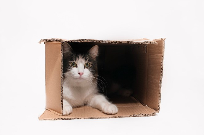 This is one of my favorite cat portraits. Everyone who knows cats knows that they have an obsession with boxes and bags. Seattle pet photography. www.dirtiedogphotography.com