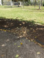 Brown from the Property -- Storm Drain Leaves