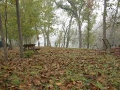 Lots of Trees Make Lots of Leaves