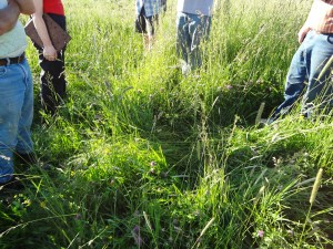 A diverse pasture guild of grasses, forbs, and legumes builds soil health.