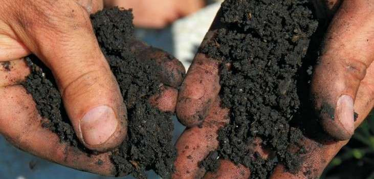 Dirty Secrets: 10 ways to improve garden soil. Guest post on Gardenista.com