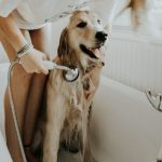Home Cleaning Tips for Dog