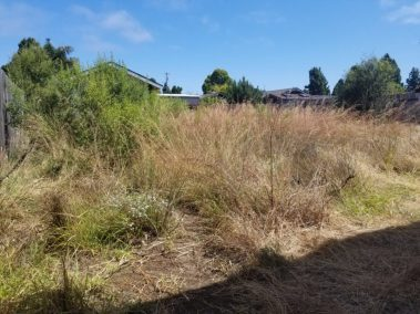 Overgrown Yard Cleanup Service in Grover Beach, Ca