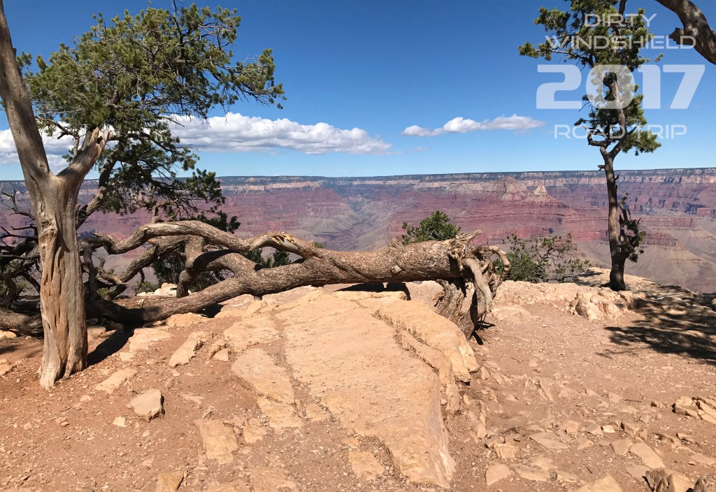 Grand Canyon Fallen Tree Resting on the Edge