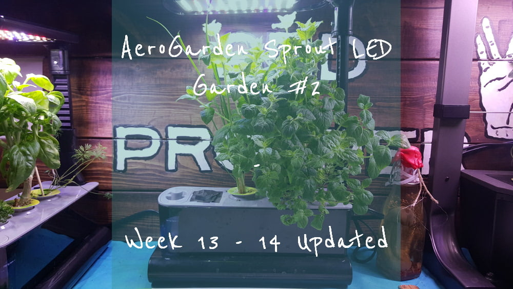 AeroGarden Sprout LED Garden 2 Week 13 – 14 title card