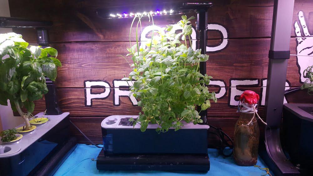 AeroGarden Sprout LED Garden 2 Week 16 before harvest