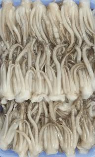 Squid Tentacles