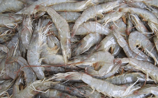 Gambas Shrimp