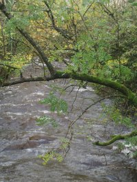tree trunk and river