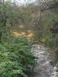 Rhymni river in flood