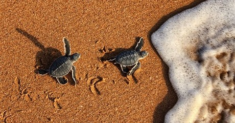 Oman: 1 or 2 Nights with Turtle Viewing