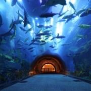 Dubai Aquarium and Aqua Nursery