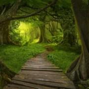 Meditation Online Course