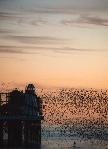 The sun sets behind a burned old pier. Birds flock in the foreground.