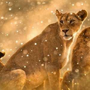 Micato Safaris – Exquisite Explorer