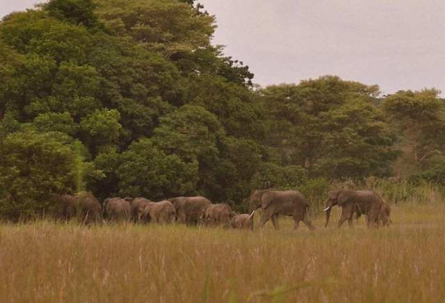 Wildlife National Parks in Zambia