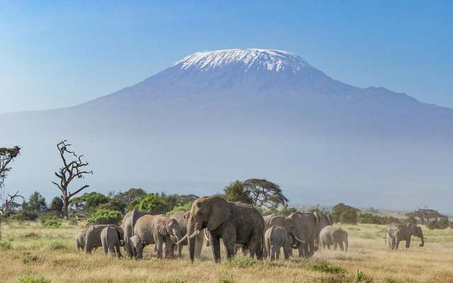 Elephant with Mount Kilimanjaro in the background - Best Photos of Mt. Kilimanjaro and Amboseli National Park Elephants