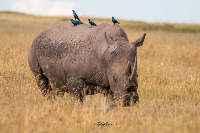 Enjoy The Photos in Honoring World Rhino Day 2020
