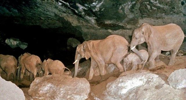 Meet The Salt Mining Elephants of Mt. Elgon (Kitum Caves)