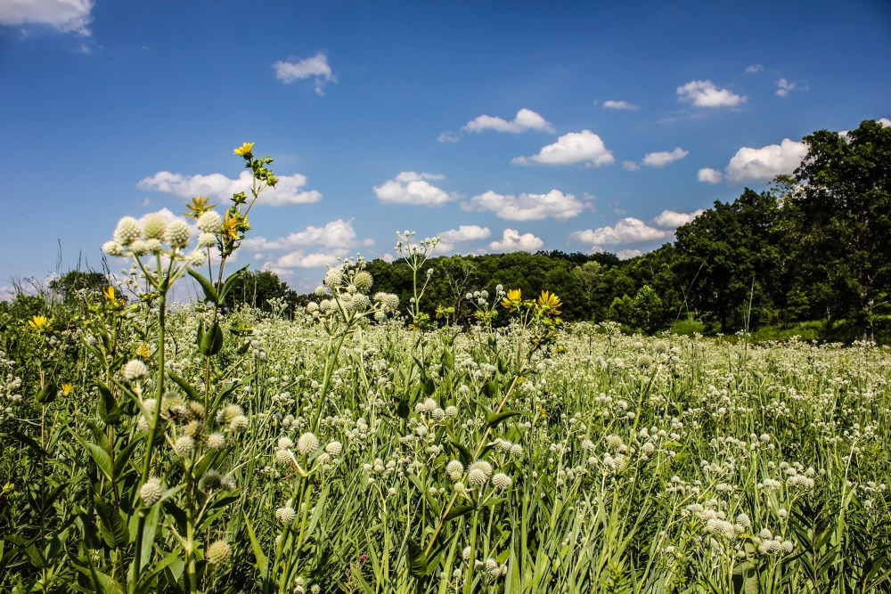 Shaw Nature Reserve Prairie