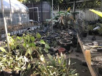 Storm-ravaged plant collections and pots. Photo by Jennifer Smock.