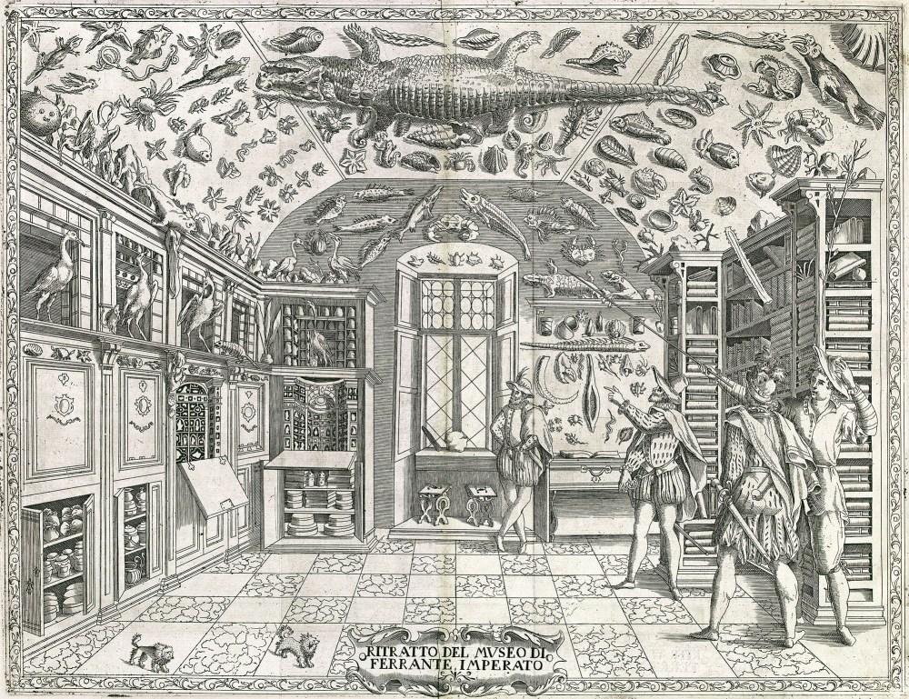 Illustration of natural history cabinet