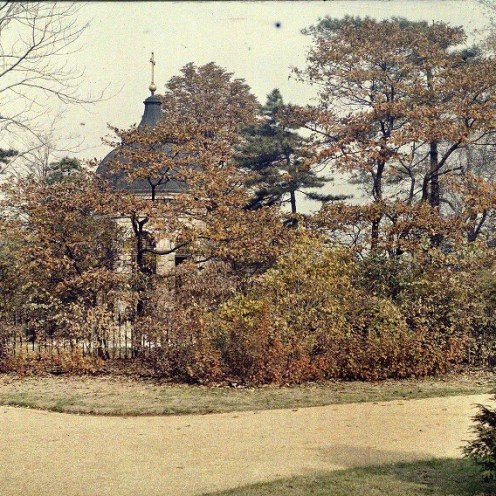 Sassafras showing their fall color in 1909. Color magic lantern slide from the Missouri Botanical Garden archives.