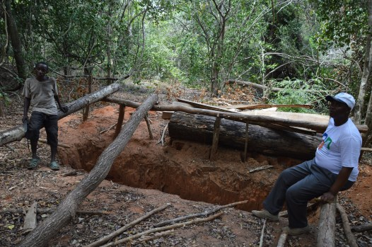 A logging pit near a population of Karomia gigas. Photo by Andrew Wyatt.